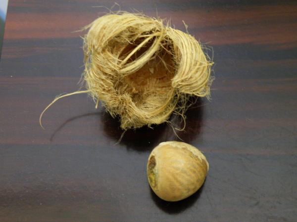 31-04老檳榔果實