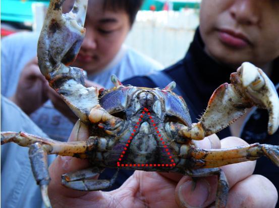 10公的蟹