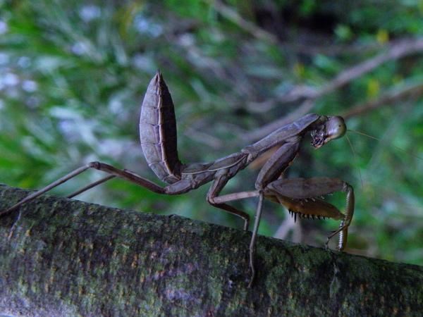 09-02螳螂