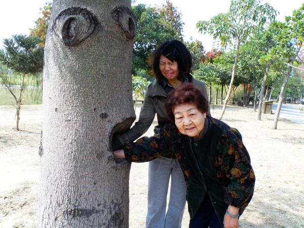 07-11酒瓶樹.JPG