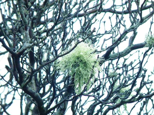 03-06雲霧中的松蘿.JPG