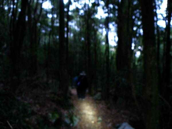 16-01日出前森林浴.JPG