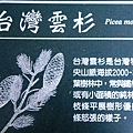 20-01台灣雲杉.JPG