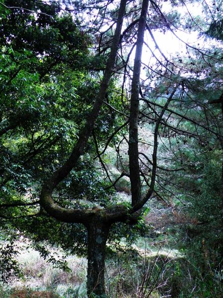27-01長相奇特的樹.JPG