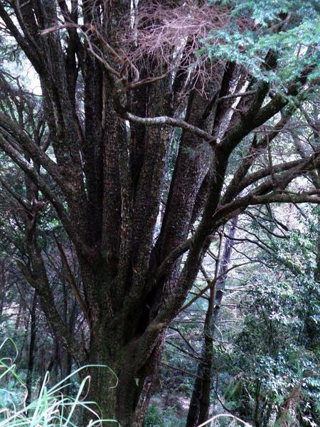 27-02長相奇特的樹.JPG