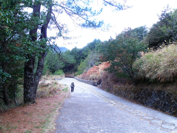 30-04神木步道.JPG