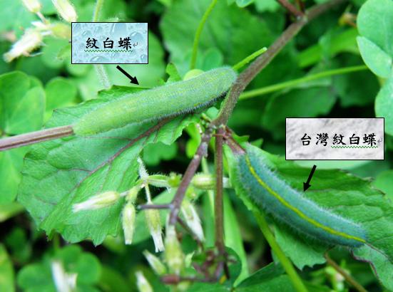 28-03紋白蝶.bmp