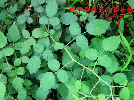 04-04刺莓.bmp