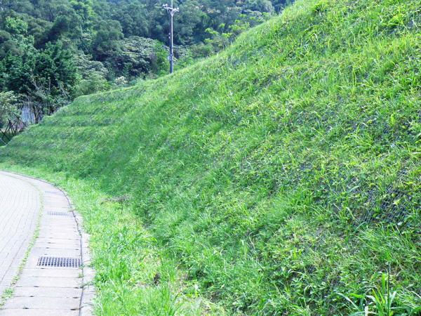 03-02金龍湖畔陡直護坡.JPG