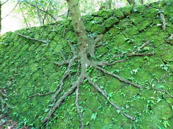 15-01樹根造型.JPG