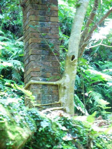 15-03樹根造型~竹節蟲.JPG