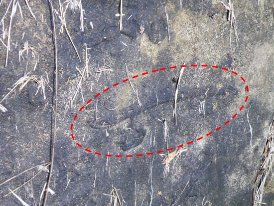 04-03生痕化石.bmp