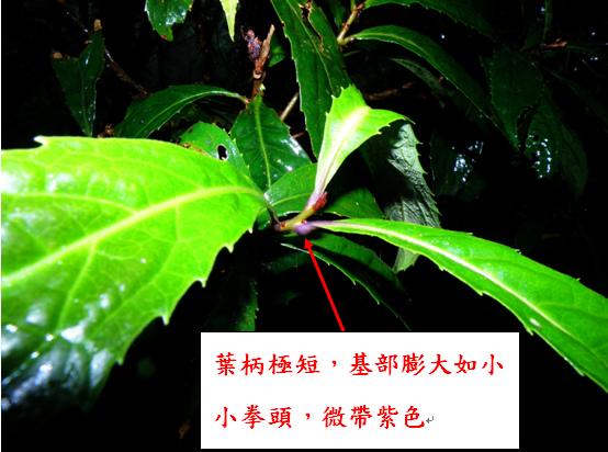 09-03山龍眼.bmp