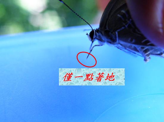 07-02小灰蝶公的.bmp