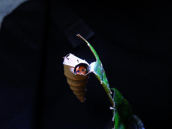 07-02鸞褐弄蝶.JPG
