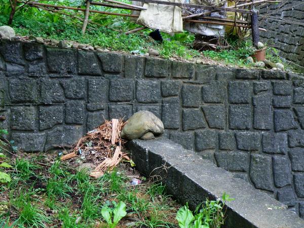11-01烏龜石.JPG