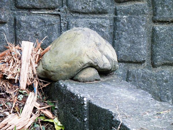 11-02烏龜石.JPG