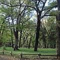 111112-03-井之頭公園.JPG