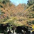 111112-04-井之頭公園.JPG