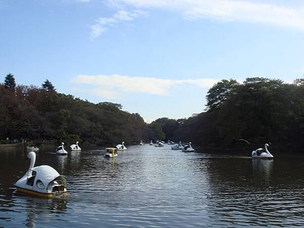 111112-14-井之頭公園.JPG