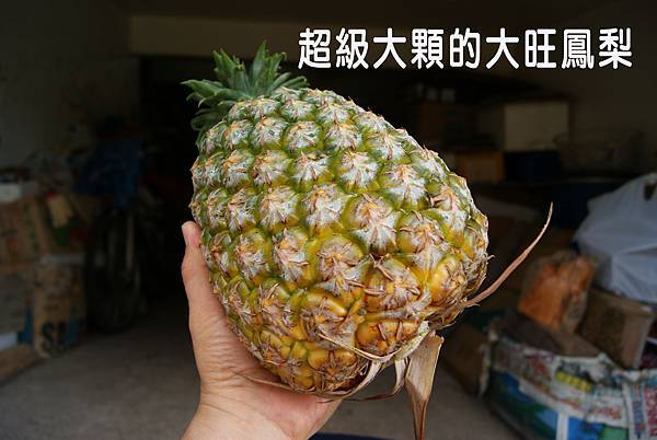 大旺鳳梨(西瓜鳳梨)