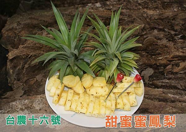 台農十六號 %2F 甜蜜蜜鳳梨