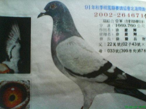 9M65f_qUorygAubbo.F3PQ.jpg