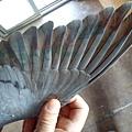 12位翅膀.jpg