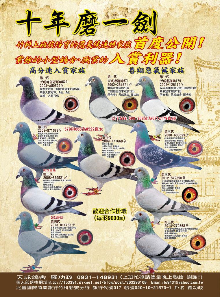 天成鴿舍 羅功政-01