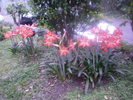 41龜山居民自種的花兒.JPG