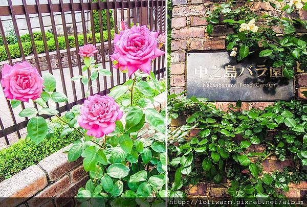 日本大阪赏花推荐 中之岛公园 满满的玫瑰花园!