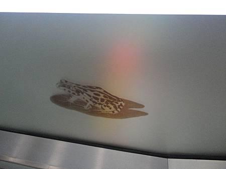 南港展覽館站電扶梯側小動物的特寫.JPG