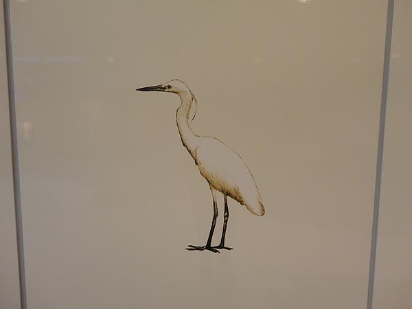 三和國中站琺瑯板上的白鷺鷥
