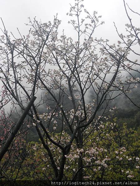 2012陽明山花季~(4/6)