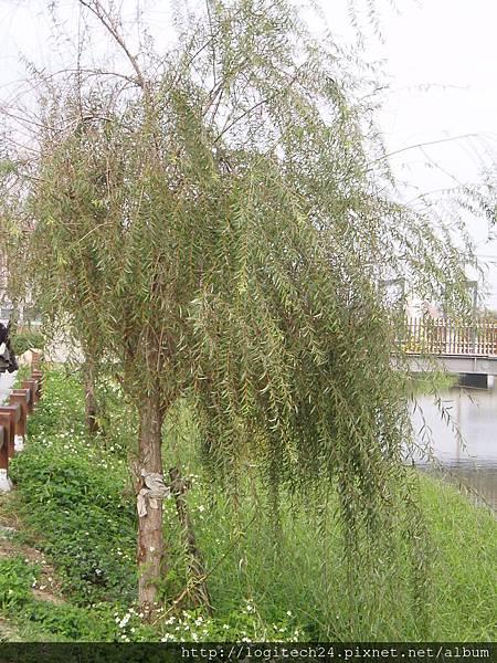 2012鹽水水燈~(4/5)