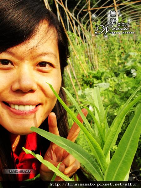 sharp_leaves_lettus_45.jpg