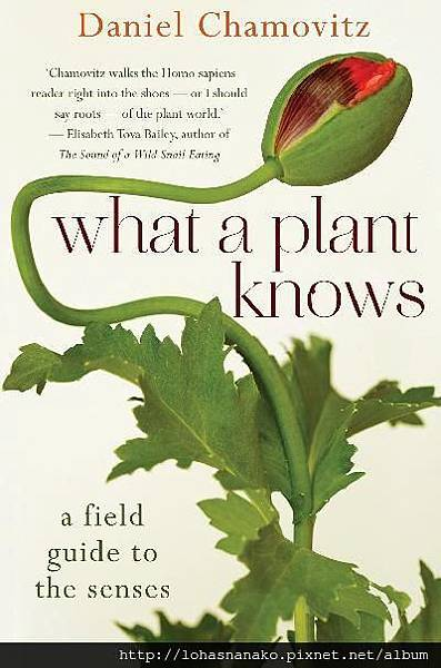 what-a-plant-knows-a-field-guide-to-the-senses