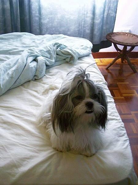 好柔軟的床.司以不可以尿尿呢