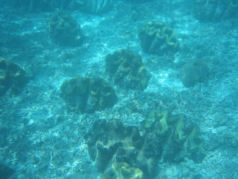 洛克群島 - 干貝城