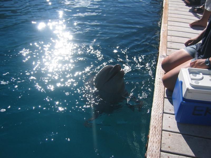 Rock Land 洛克群島 - 海豚研究中心