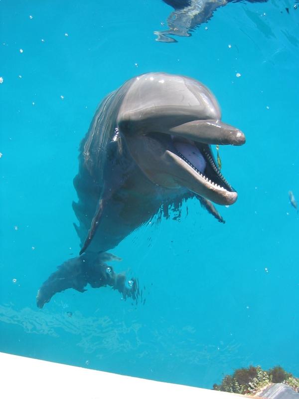 洛克群島 - 海豚研究中心
