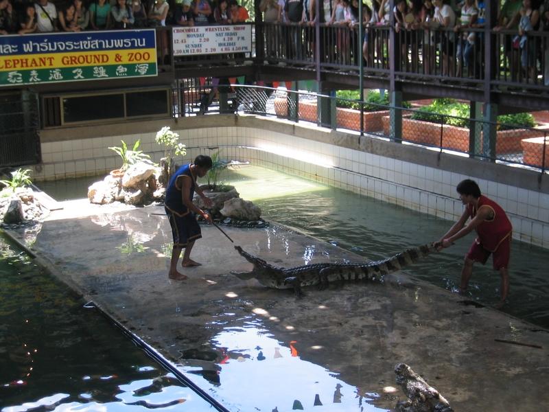 三攀象戰場樂園 - 鱷魚表演