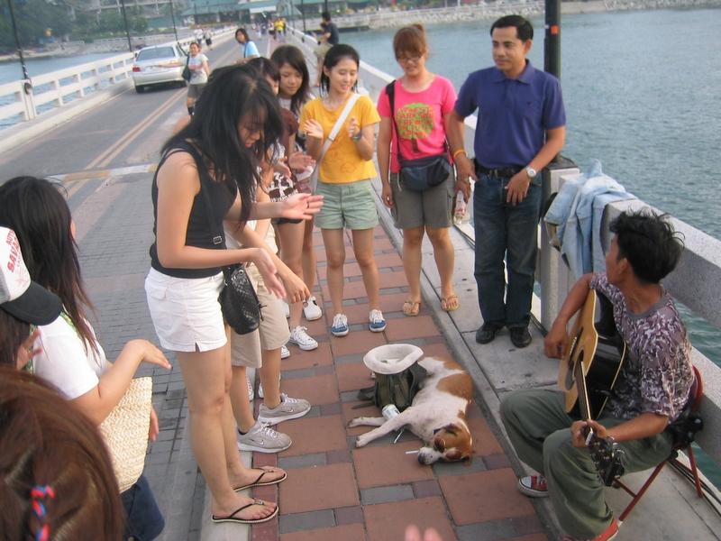 街頭賣藝 - 流浪的狗