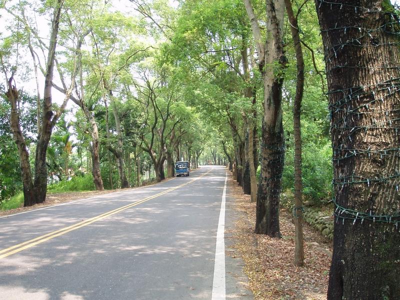 集集小鎮 - 綠色隧道