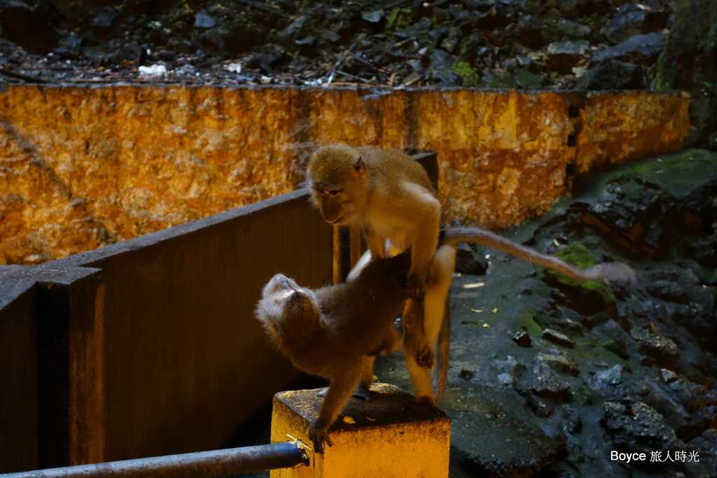 2013-5-17 吉隆坡-黑風洞-土產之旅-麻六甲-三寶廟-雞場街-古城-HATTEN HOTEL.rar