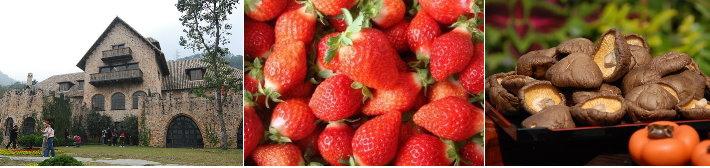 新社古堡.大湖草莓.香菇