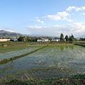 2016-05-14 沙溪古鎮-稻田 (1).JPG