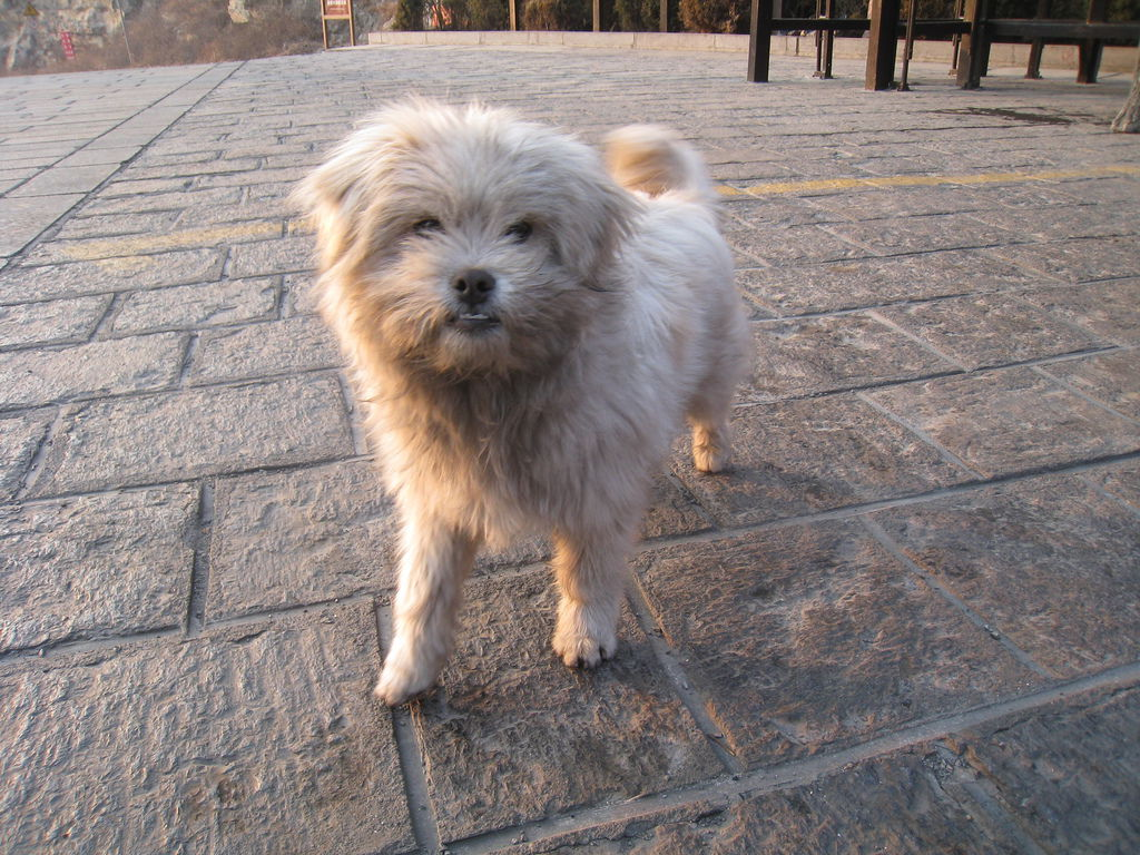 雲台山茱萸峰 狗狗