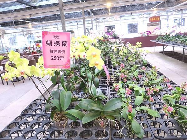 金車蘭花園08.JPG