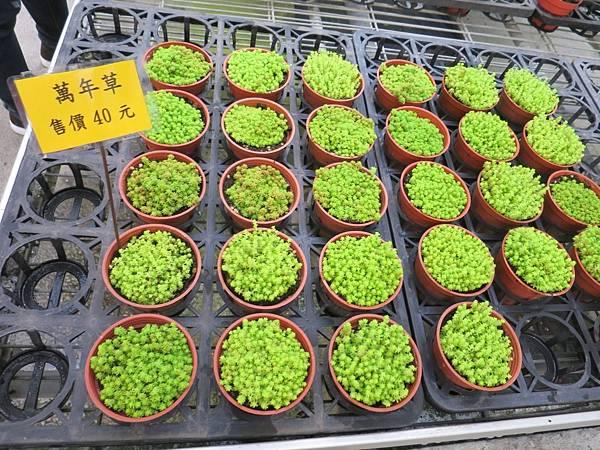 金車蘭花園17.JPG